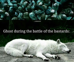ghost, game of thrones, and wolf image