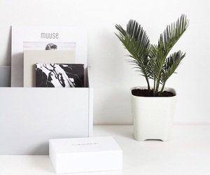 plants, white, and interior image
