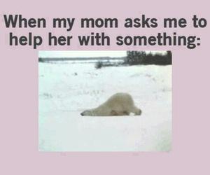 funny and Polar Bear image
