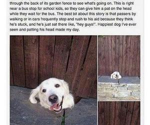 aww, dog, and cute image