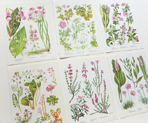 home decor, pink flowers, and botanical prints image