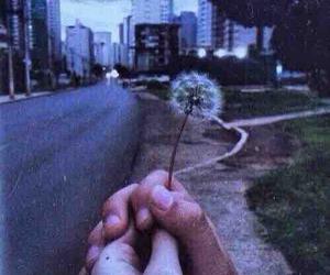 grunge, dandelion, and flowers image