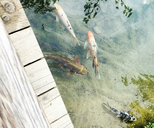 fish and japan image