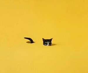 cat, yellow, and aesthetic image