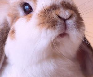 wallpaper, rabbit, and animal image