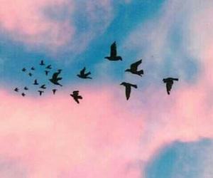 bird, sky, and wallpaper image
