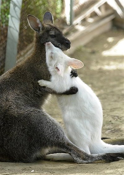 kangaroo and cute image