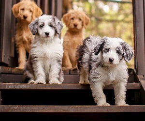adorable, animals, and pet image