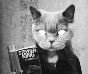cat, Stephen King, and black and white image
