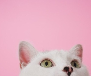 cats, soooo cute, and pink image