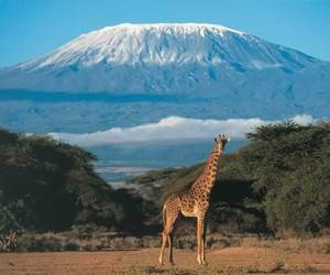 nature, africa, and giraffe image