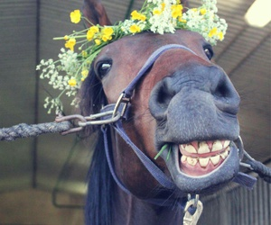 horse, ride, and smile image