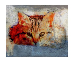 art, cats, and kitten image