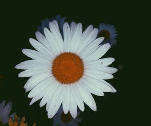 beautiful, daisies, and feelings image