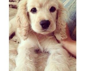 puppies, animal, and dog image