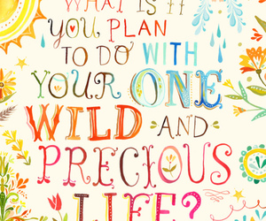 quotes, life, and wild image