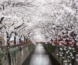 japan, flowers, and tumblr image