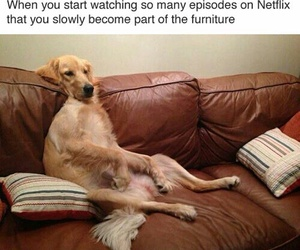 funny, so true, and netflix and chill image