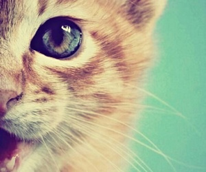 feline and perfect image