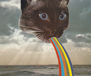 cat, rainbow, and indie image
