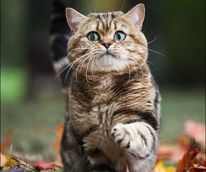 cat, autumn, and funny image