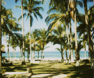 beach, luxury, and palm trees image