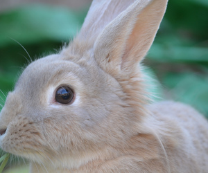 animals, bunny, and bunny rabbits image
