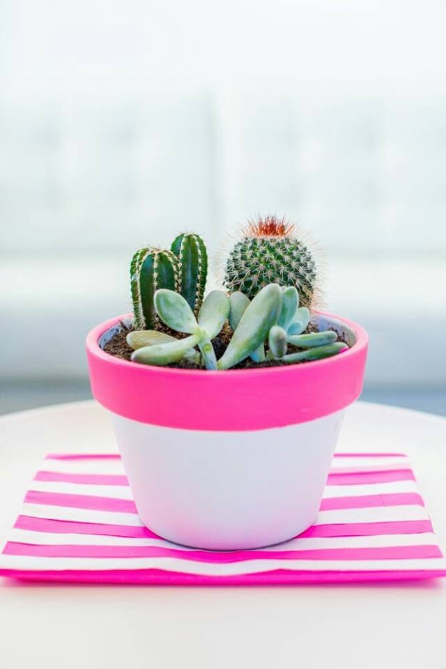cactus and plant image