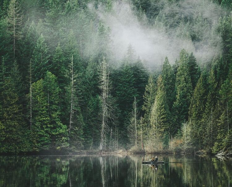fog, forest, and green image