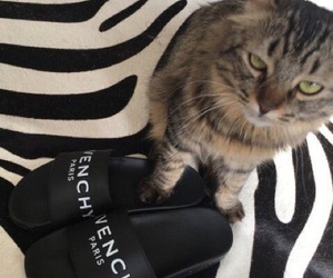 Givenchy, kitty, and sandals image