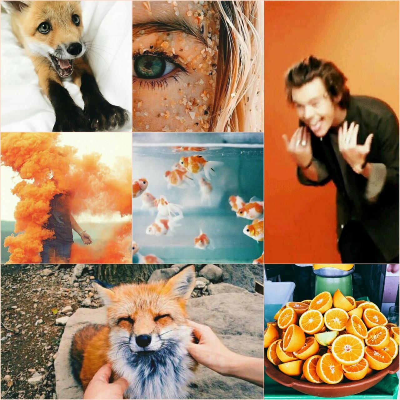 autumn, fox, and fresh image