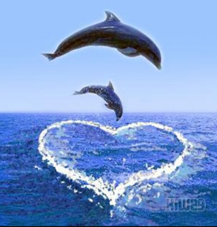 dolphins and love image