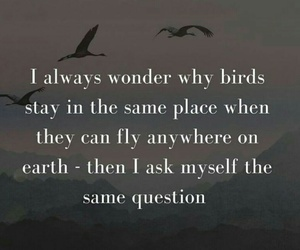 birds, quote, and writing image