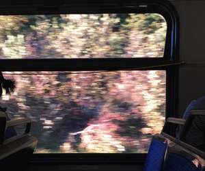 flowers, train, and travel image