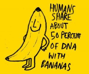 banana, DNA, and fact image