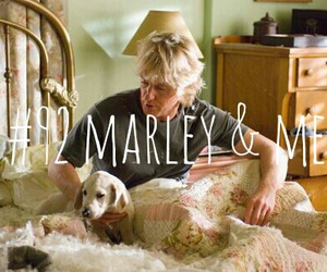 animals, dog, and family image