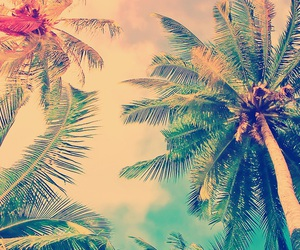 palm trees, summer, and wallpaper image