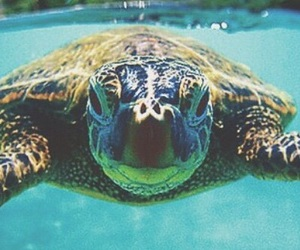 turtle, beach, and ocean image