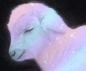 cute, baby, and lamb image