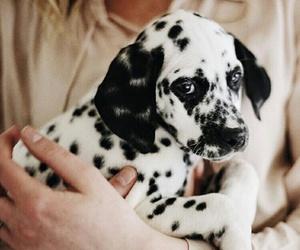 animal, beautiful, and blacka and white image