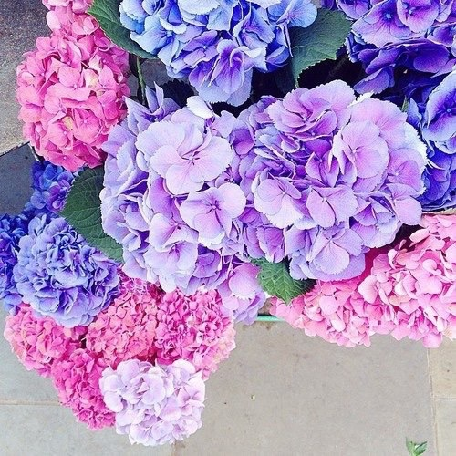 37 Images About On We Heart It See More Flowers Pink And Nature