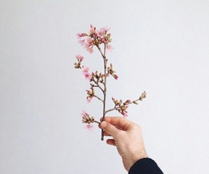 flower and hand image