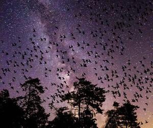bird, night, and sky image