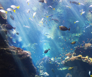 fish, ocean, and sea image