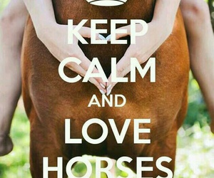 horse and keep calm image