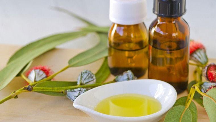 eucalyptus oil uses and eucalyptus essential oil image