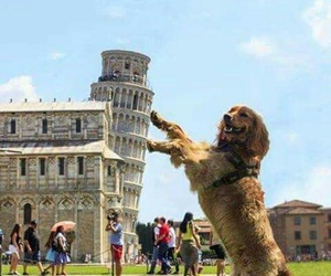 dog, Pisa, and wow image