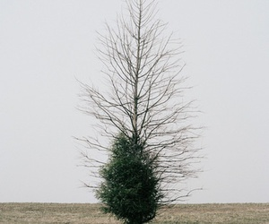 tree, nature, and indie image
