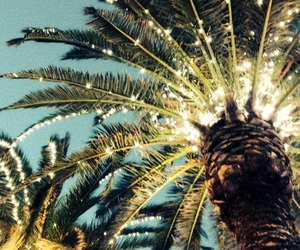 light, summer, and palm trees image