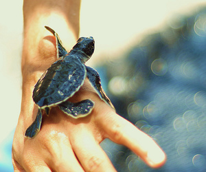 baby turtle, sea turtle, and cute image